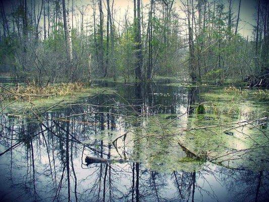 global business development swamp